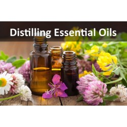 Distilling Essential Oils With A Moonshine Still